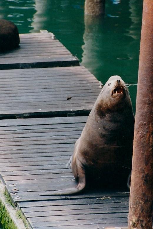 walrus0001 (2)