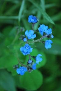 Wild Flowers 001