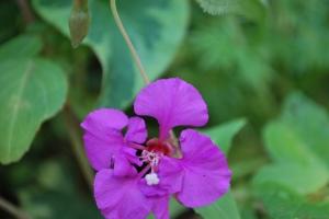 Wild Flowers 007